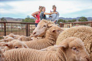 Katherine, Hannah, Claire the sheep wranglers at Bendleby Ranges - 26-05-14 (3)